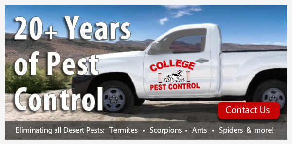 pest-control-east-valley chandler mesa